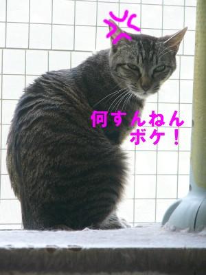 いっちゃん 5.24.JPG