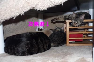 こたつの中 2.18.JPG