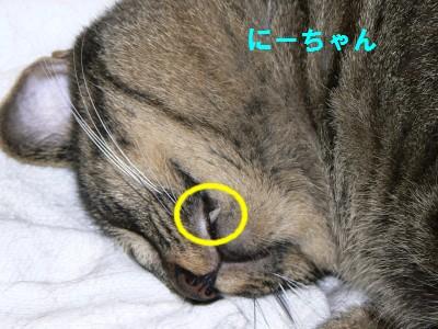 にーちゃん 9.15.JPG