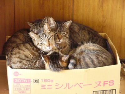 ひと箱 3.27.JPG