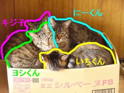ひと箱 3.28.jpg