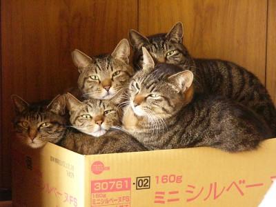 ひと箱2 3.25.JPG