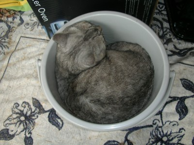 子猫1 7.18.JPG