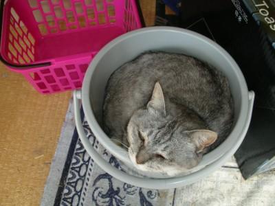 子猫1 7.6.JPG