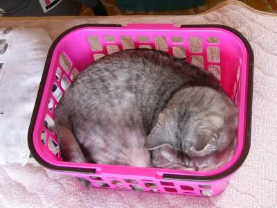子猫さん1 4.22.JPG