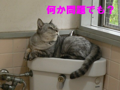 子猫さん 10.12.JPG