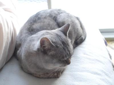 子猫さん 11.18.JPG