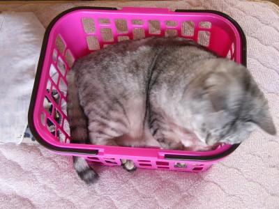 子猫さん2 4.22.JPG