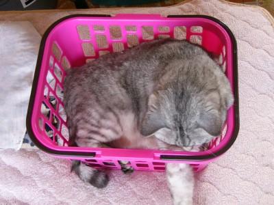 子猫さん3 4.22.JPG