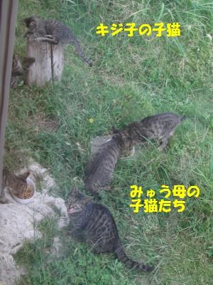 子猫の食事風景 9.30.JPG