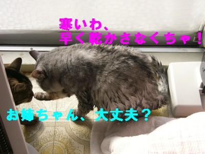 寒中水泳3 12.7.JPG
