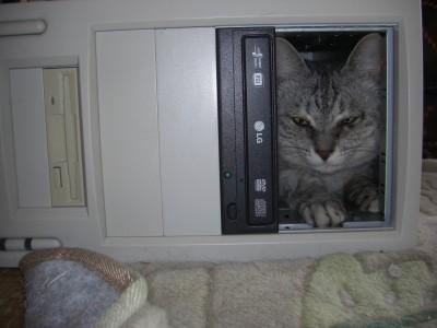 猫の霊1 9.21.JPG