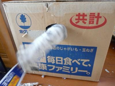 猫の霊2 9.21.JPG