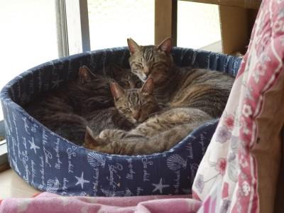 猫ベッド 5.5.JPG