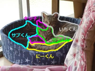 猫ベッド 5.7.jpg