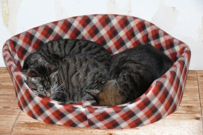猫ベッド3 1.8.JPG