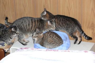 猫ベッド4 1.8.JPG