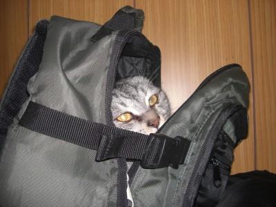 猫喰いカバン 9.21.JPG