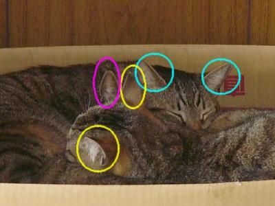 箱の中身は 4.20.jpg