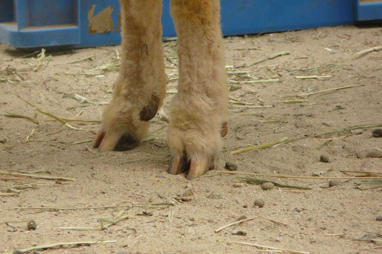 ★★★●≧女の足の匂い≦●★★★41臭目 [無断転載禁止]©bbspink.comYouTube動画>8本 ->画像>261枚