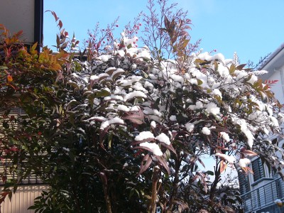 雪 1.15.JPG