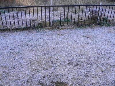 雪 1.30.JPG