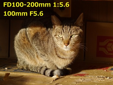 100mm f5.6 1.24.JPG
