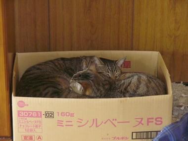 箱の中身は1 4.19.JPG