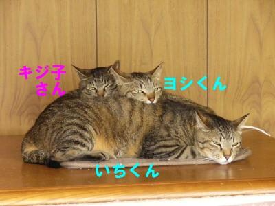いちよしきじ 6.7.JPG