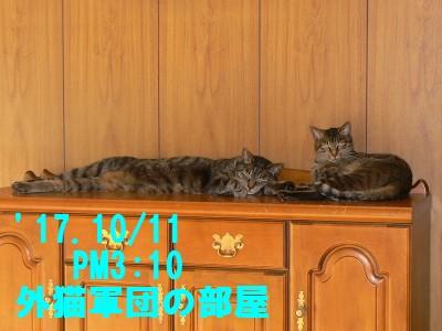 サブくん&キジ子 10.12.JPG