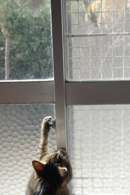 猫とカマキリ 12.9.JPG