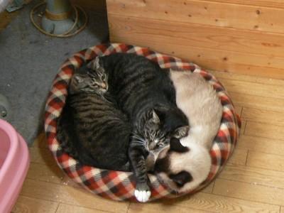 猫ベッド2 7.18.JPG