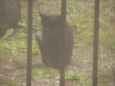黒子猫 7.20.JPG