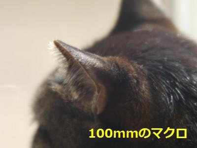 RIKENON70-150macro-3.JPG