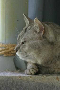 子猫さん 6.21.JPG